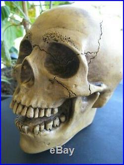 Vintage Randotti Laughing Skull Marked # 847 Randotti & Still Glows In The Dark